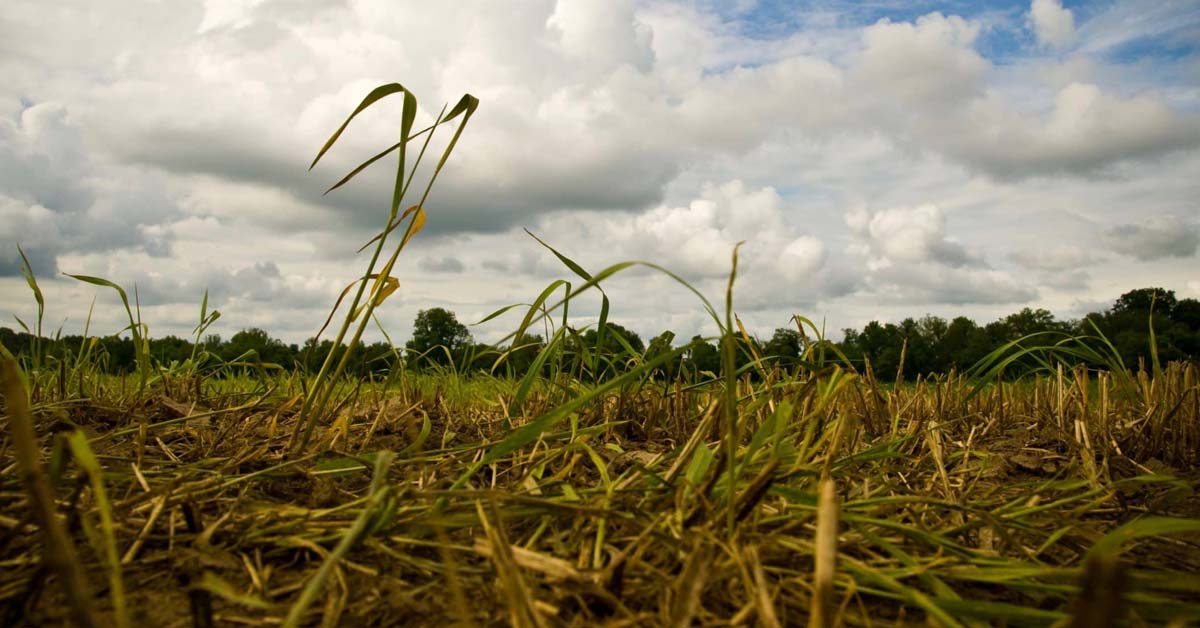 MD Council Declares State of Agricultural Disaster